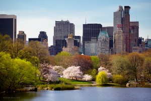 central park spring 300x200 My Mineral Super Heroes